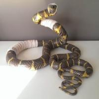 <em>Accident de chasse - Mangrove snake</em><br />