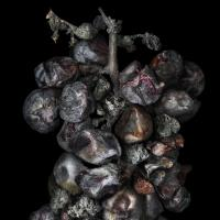 <em>Noble Rot 13&nbsp;</em>from&nbsp;<em>Noble Rot&nbsp;</em>serie<br />