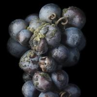 <em>Noble Rot 8&nbsp;</em>from&nbsp;<em>Noble Rot&nbsp;</em>serie<br />