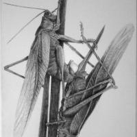 <em>Struggle for Life</em><br />